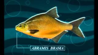 Отчет о рыбалке в рыбхозе сенеж