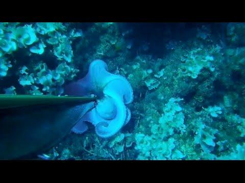 Video su inverno pescando su un crucian e una carpa