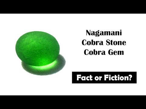 Cobra pearl (Nagamani) cobra stone: Fact or Fiction?