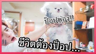 เมื่อหมาบ้าน กลายเป็นหมาข้างถนน..┇อยู่เมืองดัดจริต ชีวิตต้องป็อป!!🔥 - dooclip.me