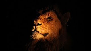 National Geographic Wild ~ Night in the lion's Empire