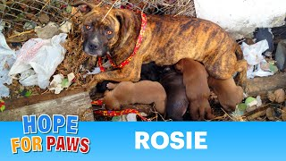 Rescuing a family of dogs with help from iPhone and You Tube.  Please share.