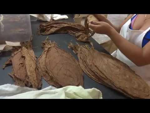 VIDEO: Garantiza  fábrica de tabacos Rubén Nogueras estabilidad en sus producciones  pese a las limitaciones actuales