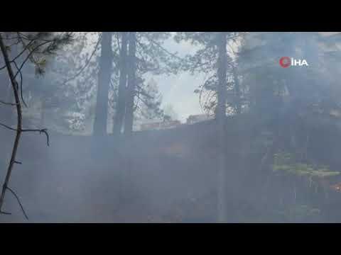 Yaz geldi, orman yangınları başladı!