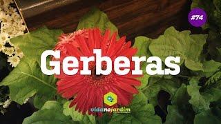 Gerberas #74 - Dicas Rápidas