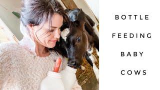 Feeding a Bottle Calf | Preventing Scours with Apple Cider Vinegar