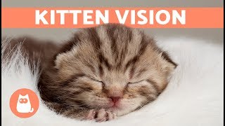 When do Kittens Open Their EYES After Birth? 🐱 Find Out Here!