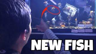 ADDING 30+ COLORFUL FISH to AQUARIUM!!
