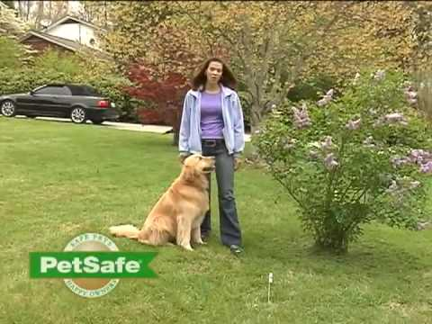 Pet Fence For Dogs Cats Dog Containment Systems And