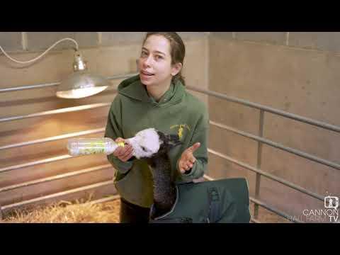 , title : 'Farmer Kate's on bottle duty - Cannon Hall Farm