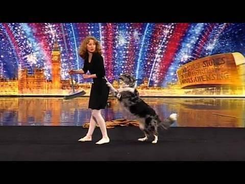 Se den utrolige dansende hunden