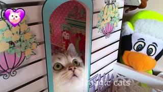 Котик симка Magic Cats НОВЫЕ ПРИКОЛЫ 2018 Смешные кошки приколы про кошек и котов 2018