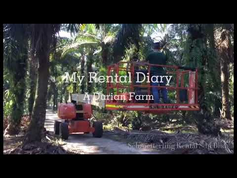 Boom Lift Rental In Malaysia-Rent A Telescopic Boom Lift in a Durian Farm