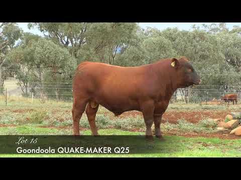 GOONDOOLA QUAKE-MAKER Q25 (AMF) (MAF) (NHF) (OSF) PSPQ25