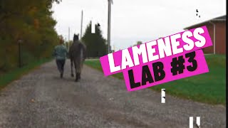 Lameness Lab #3: Is this horse lame? Training your eye to see lameness By Equine Guelph