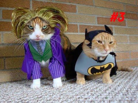Смешное видео с котиками (Funny Cat) #3