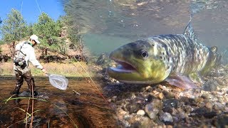 Fly Fishing for Trout on the South Platte River in Deckers COLORADO
