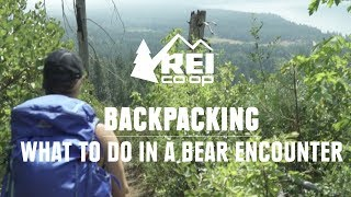 What to do in a Bear Encounter (And How to Avoid One) || REI
