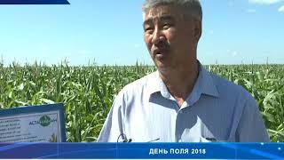 День поля: «Астана-НАН» -- завод по производству всех видов продукции для защиты растений