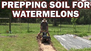 Preparing soil for watermelons with added special ingredient