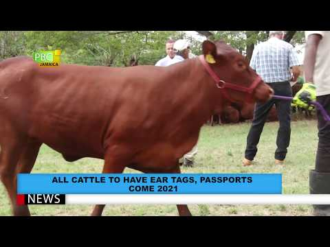 , title : 'All Cattle To Have Ear Tags And Passport Come 2021