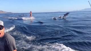 Наперегонки с дельфинами