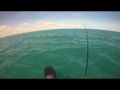Darwin Harbour queenfish trip report