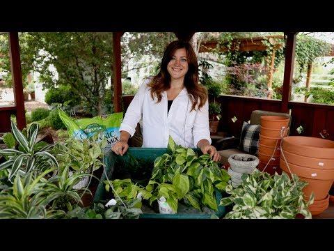 Houseplant Haul! 🌿🌿🌿// Garden Answer