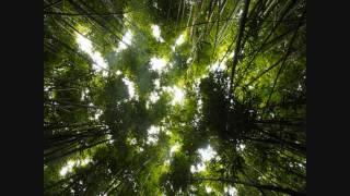 Universal Hall Pass - Avatar (Tragic Chorus Remix) [HD]
