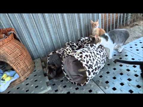 Katzen testen Katzentunnel