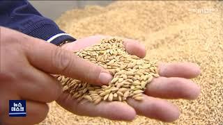 쌀 수매...예년에 없는 흉작