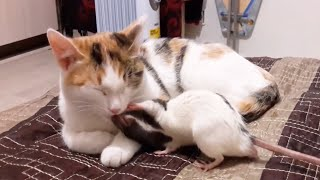 Cats and Mouse Reaction Compilation 😹🐁 [Funny Pets]