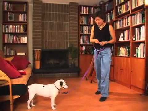Training Your Dog to Leave It