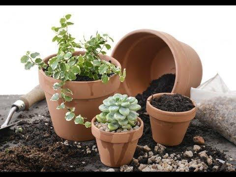 Влияние растущей ЛУНЫ на комнатные растения