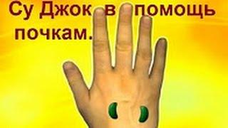 СУ ДЖОК В ПОМОЩЬ ПОЧКАМ.