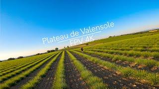 Cinematic FPV - Plateau de Valensole 4K