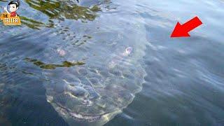 8 ปลายักษ์สายโหดใต้ทะเล ที่มีอยู่จริง ๆ ( สัตว์ประหลาด!!? )
