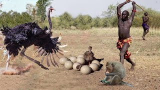 Boer Man Slammed To The Ground By Ostrich | Mother Ostrich Save Her Eggs From Monkey, Hyenas