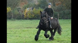 Draft Horse Gloria As A Workhorse And As A Riding Horse