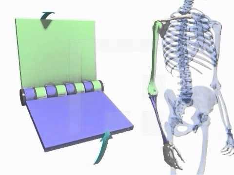 Behandlung des Schultergelenks in Bildern