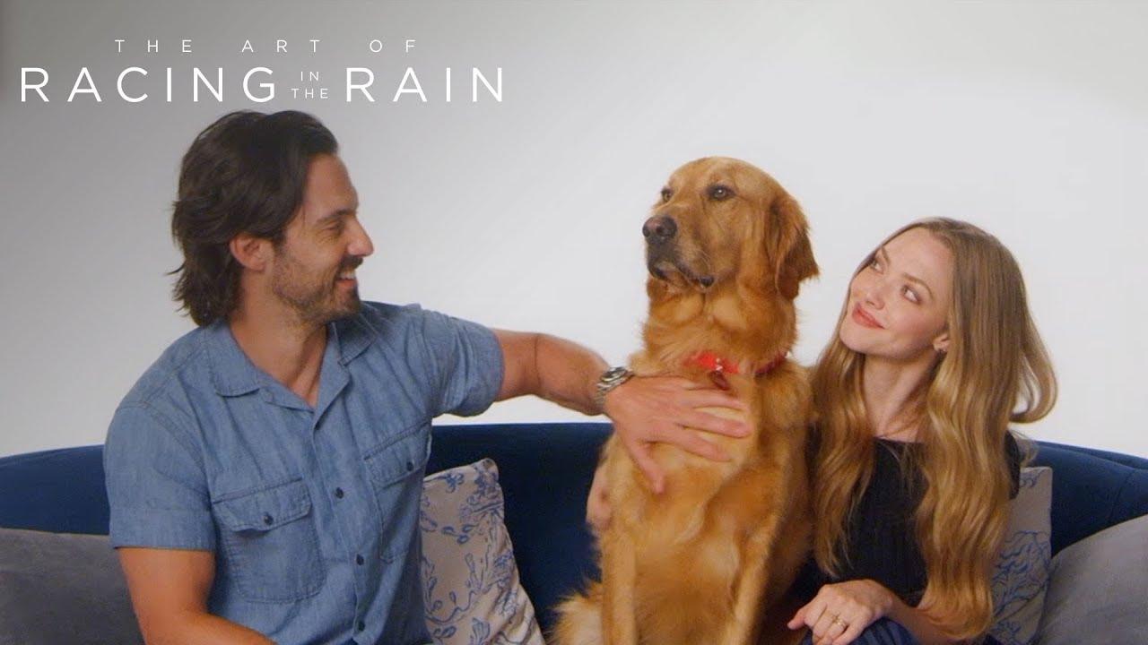 The Art of Racing in the Rain - Meet Parker AKA Enzo