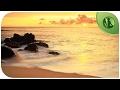 """Regardez """"? 3 HEURES Musique pour Contrôler l'Anxiété, la Peur, le Trouble Panique ☀️ Paix Intérieure"""" sur YouTube"""
