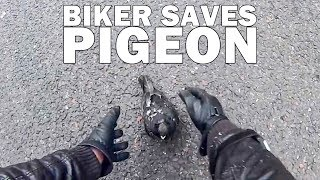 BIKERS ARE NICE | BIKERS SAVING ANIMALS AND HELPING OTHERS  |  [EP. 61]