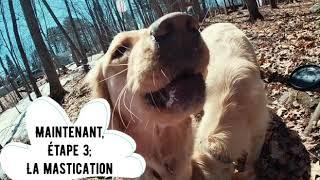 Comment garder son chien actif et équilibré!