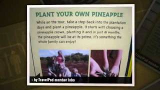 preview picture of video 'The Dole Plantation Lobo's photos around Wahiawa, United States (dole plantation pay in 1949)'