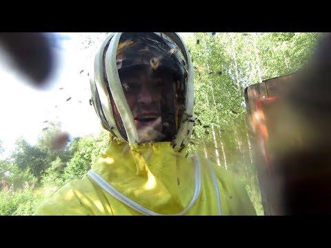 Пчеловодство. SOS! Пчёлы зомби и улей Пандоры. Взятка нет! Пчелиный бунт.