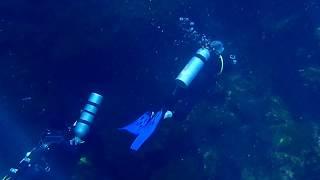Plongée Cénote : Jardin d