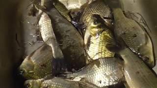 Рыбалка в карасуке новосибирской области