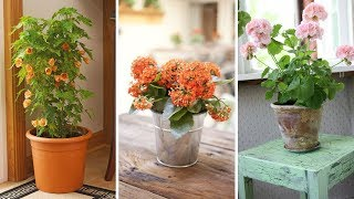 10 Creative Ideas How to Improve Your indoor with flowers
