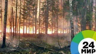 Без снега: в Совгавани введен особый противопожарный режим - МИР 24